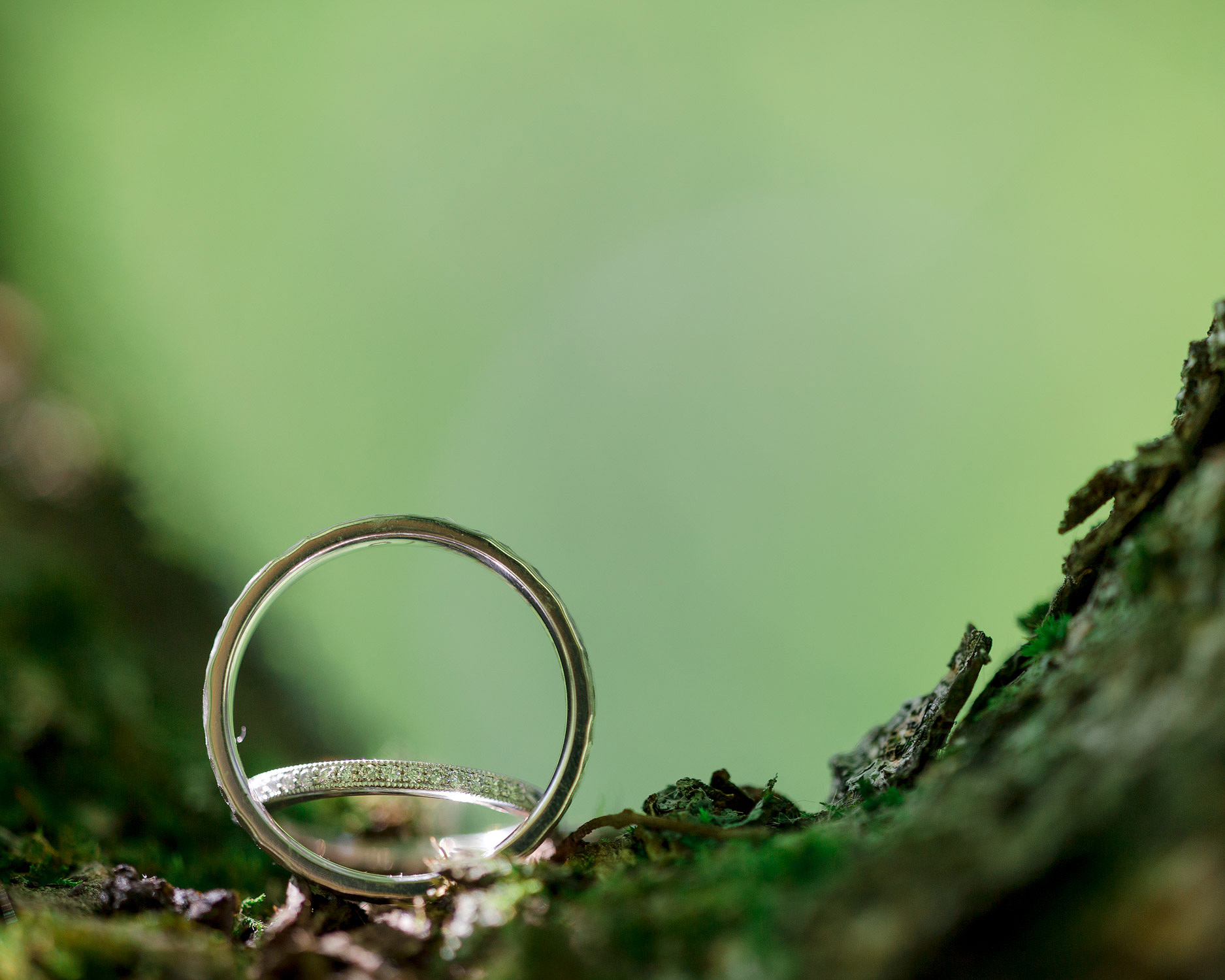Closeup of wedding rings perched in a tree